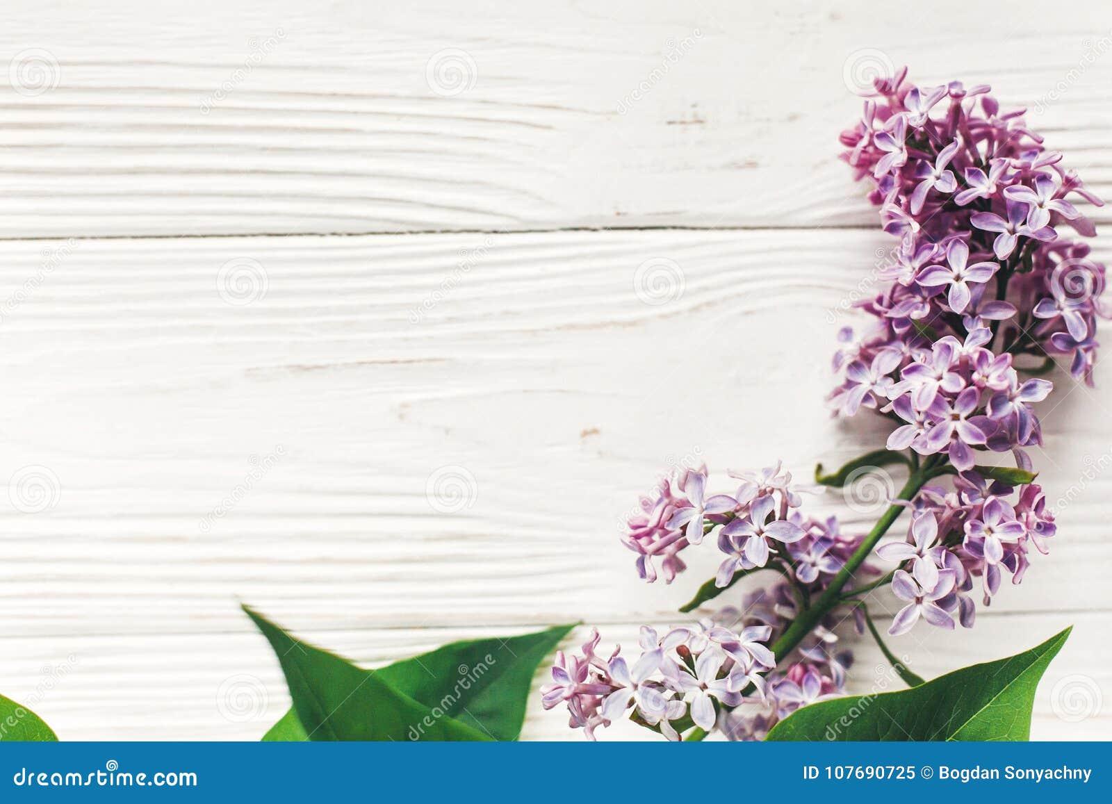 Lyckliga mödrar för dag den härliga lilan blommar på lantlig vit woode