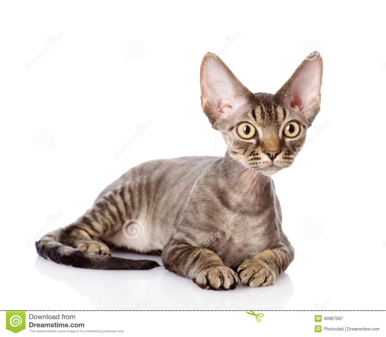 Cats Find A Cat That Looks Like Yours