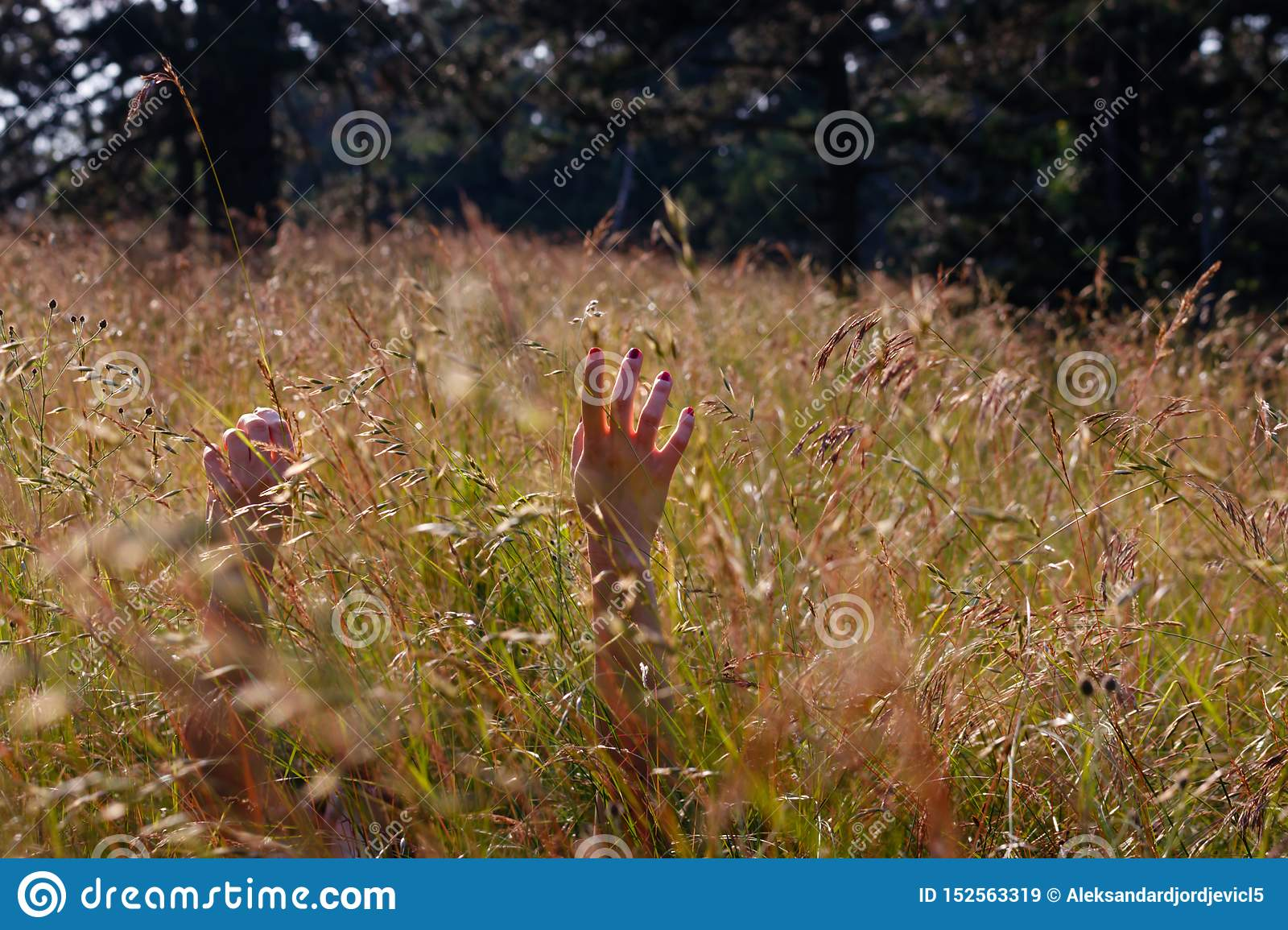 Hands of a young woman relaxing in the sunny field
