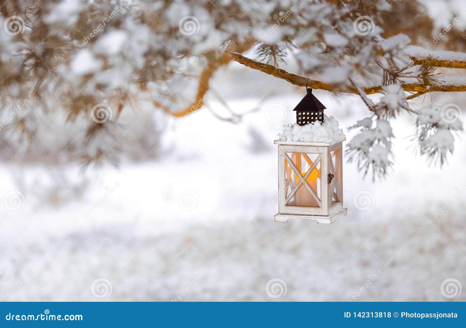 Lykta med stearinljuset på ett snöig träd