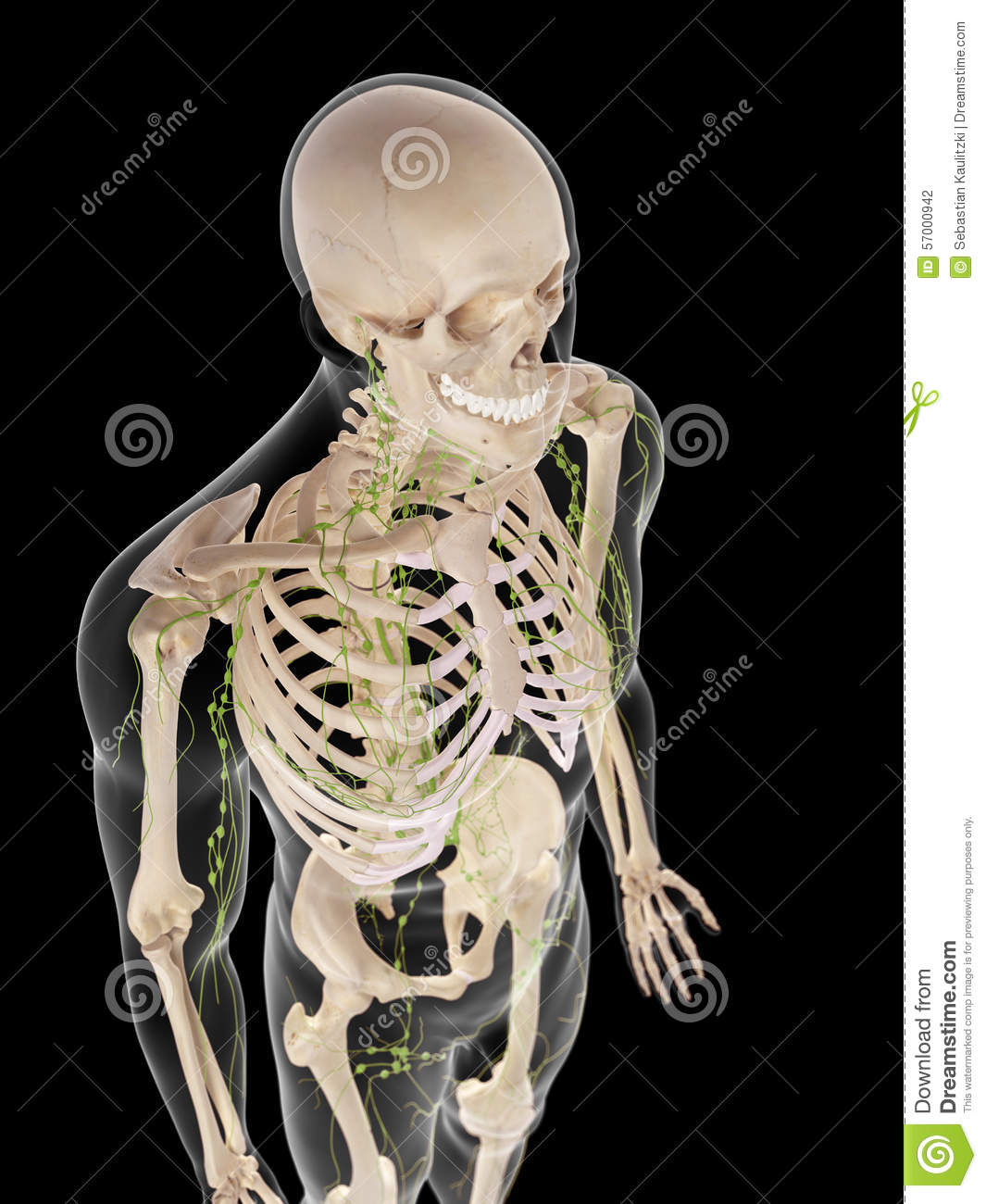 The lymphatic system stock illustration. Illustration of ...