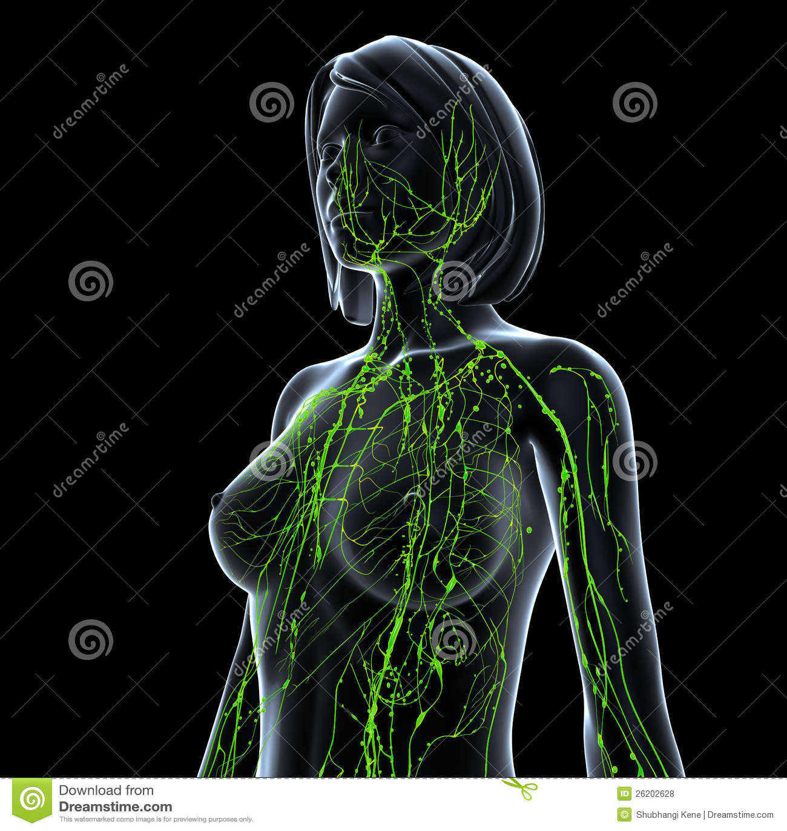 Ausgezeichnet Menschliche Lymphsystem Diagramm Fotos - Menschliche ...