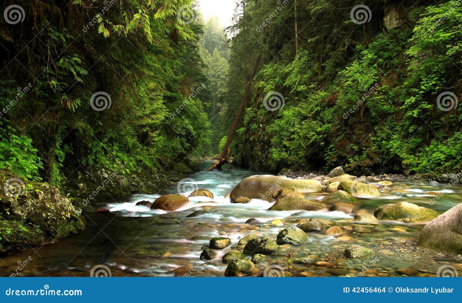 Lynn Canyon Creek
