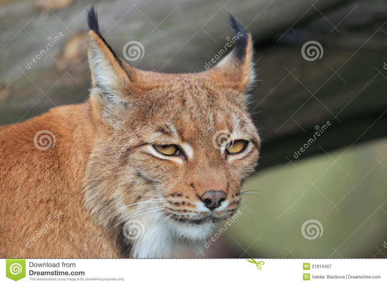 A role for LYNX2 in anxiety-related behavior