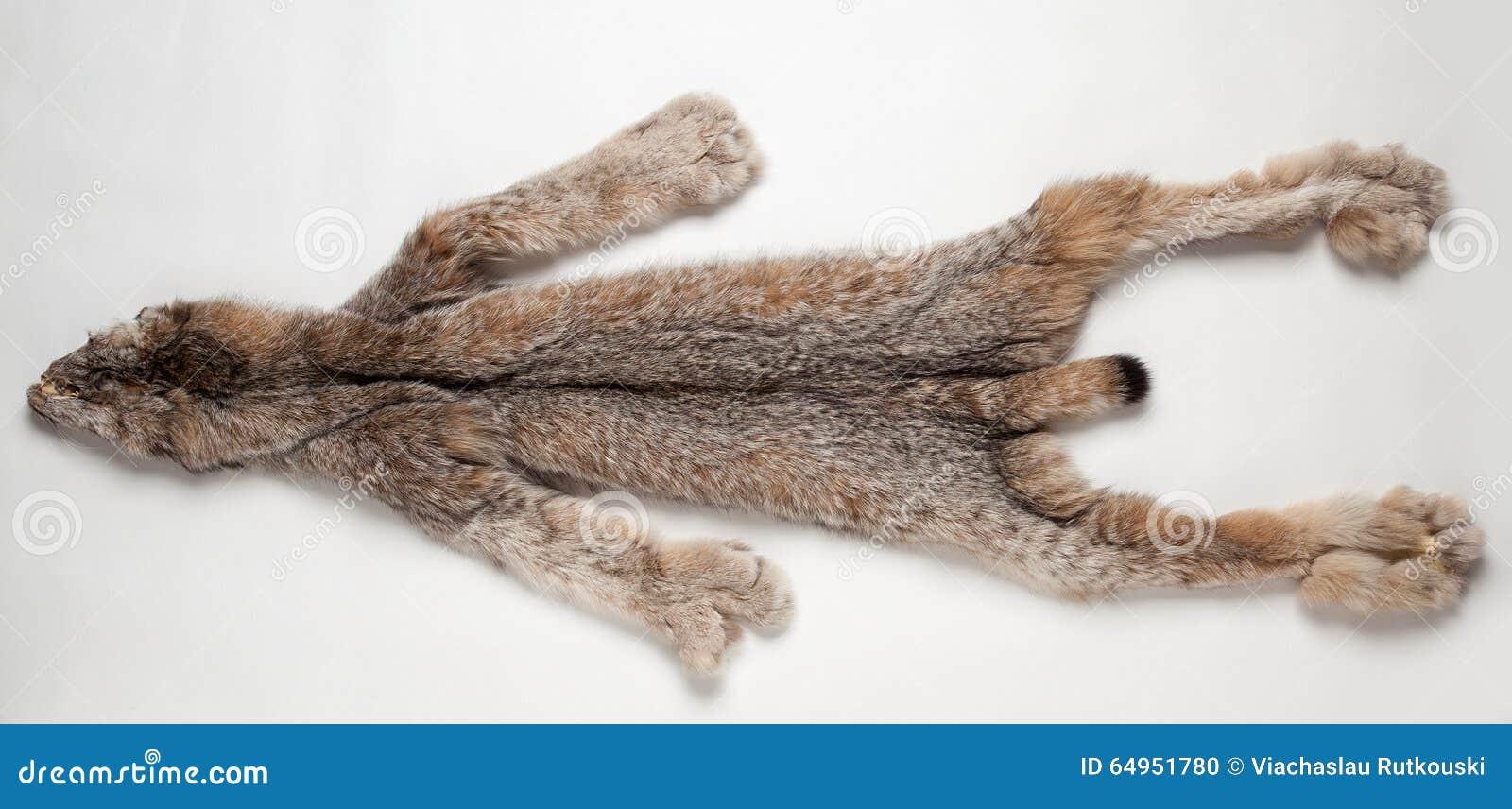 Lynx pelt stock photo. Image of carnivore, stuffed, hair - 64951780 for Lynx Pelt  54lyp