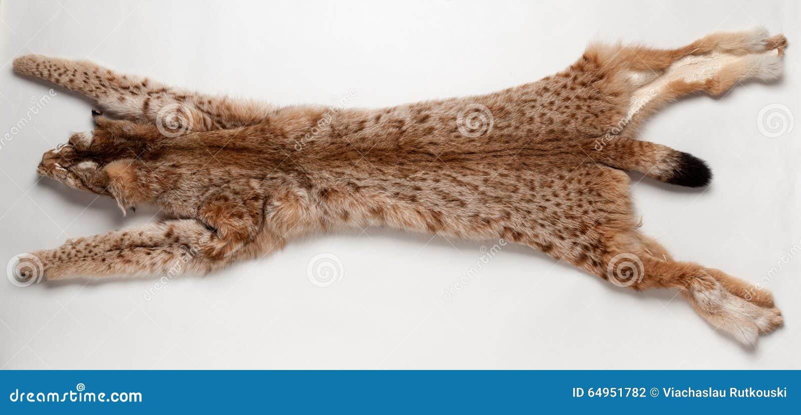 Lynx pelt stock photo. Image of wild, dead, environment - 64951782 for Lynx Pelt  568zmd