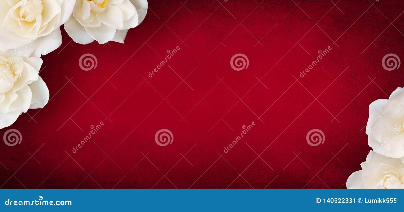 Lyxig modell för kortdesign med blommor för vita rosor