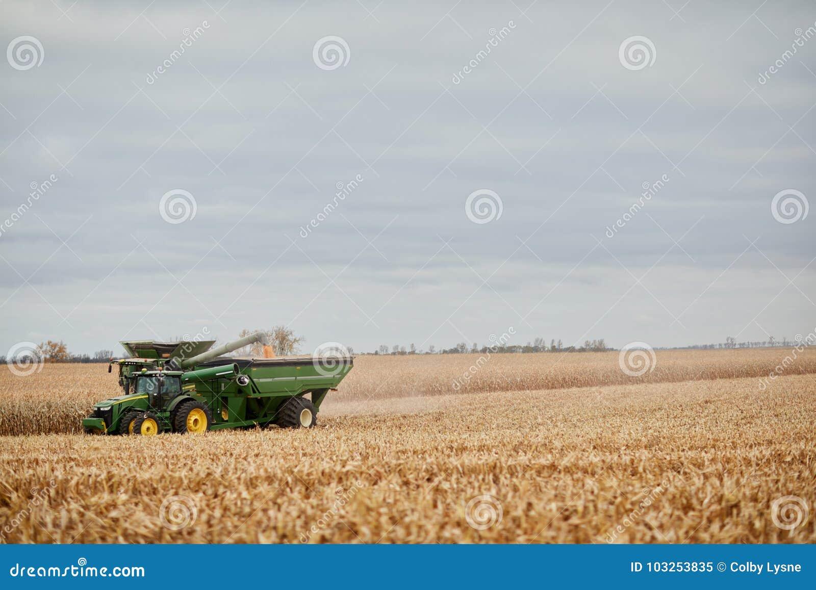Máquina segadora que llena un tractor remolque