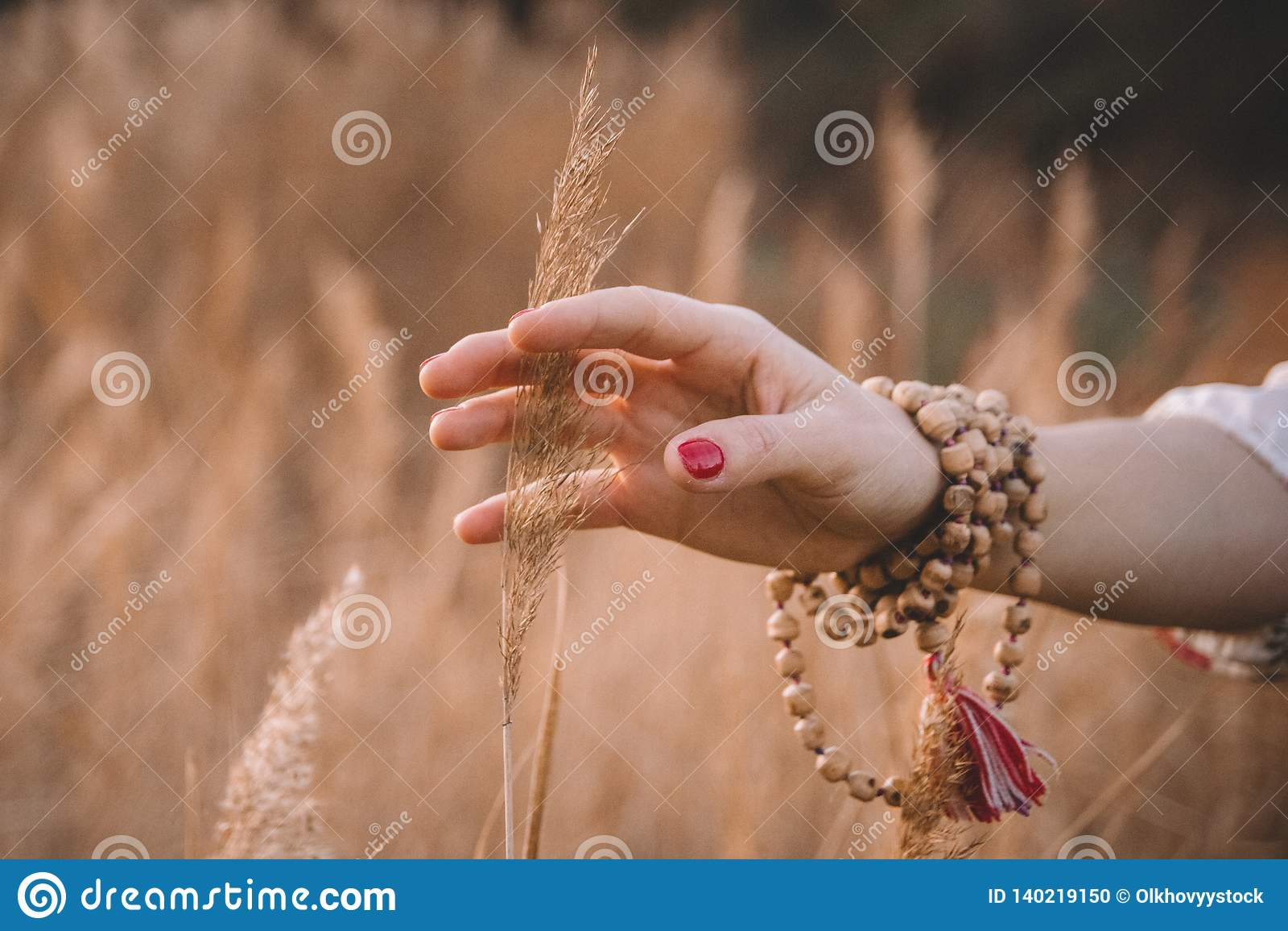 Mão da mulher que corre através do campo de trigo A mão da menina que toca no close up amarelo das orelhas do trigo Conceito da c