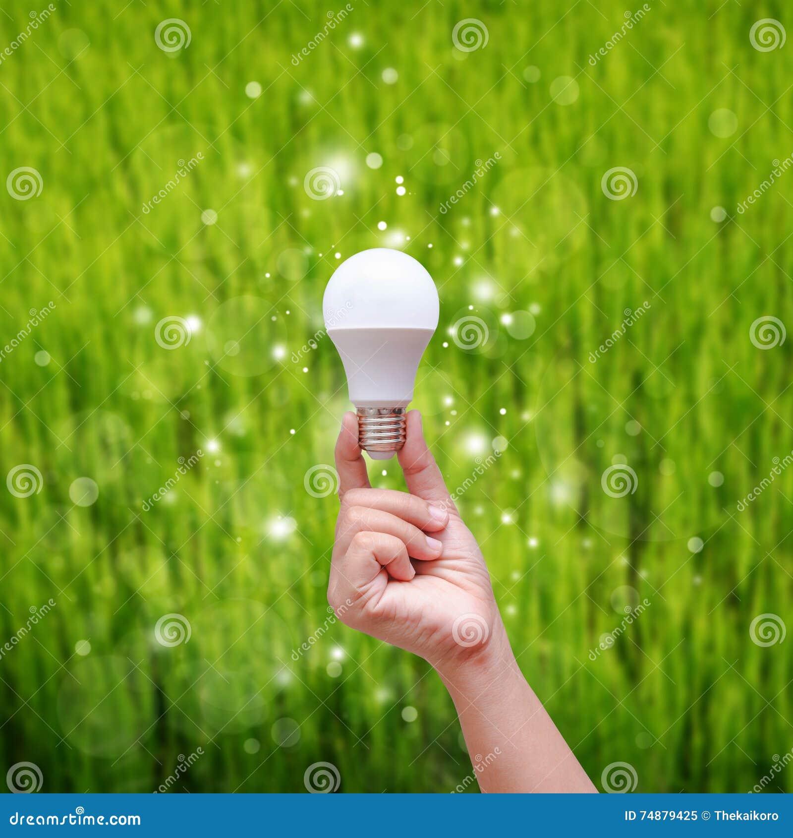 Mão da mulher que guarda o bulbo do diodo emissor de luz no backgroud verde