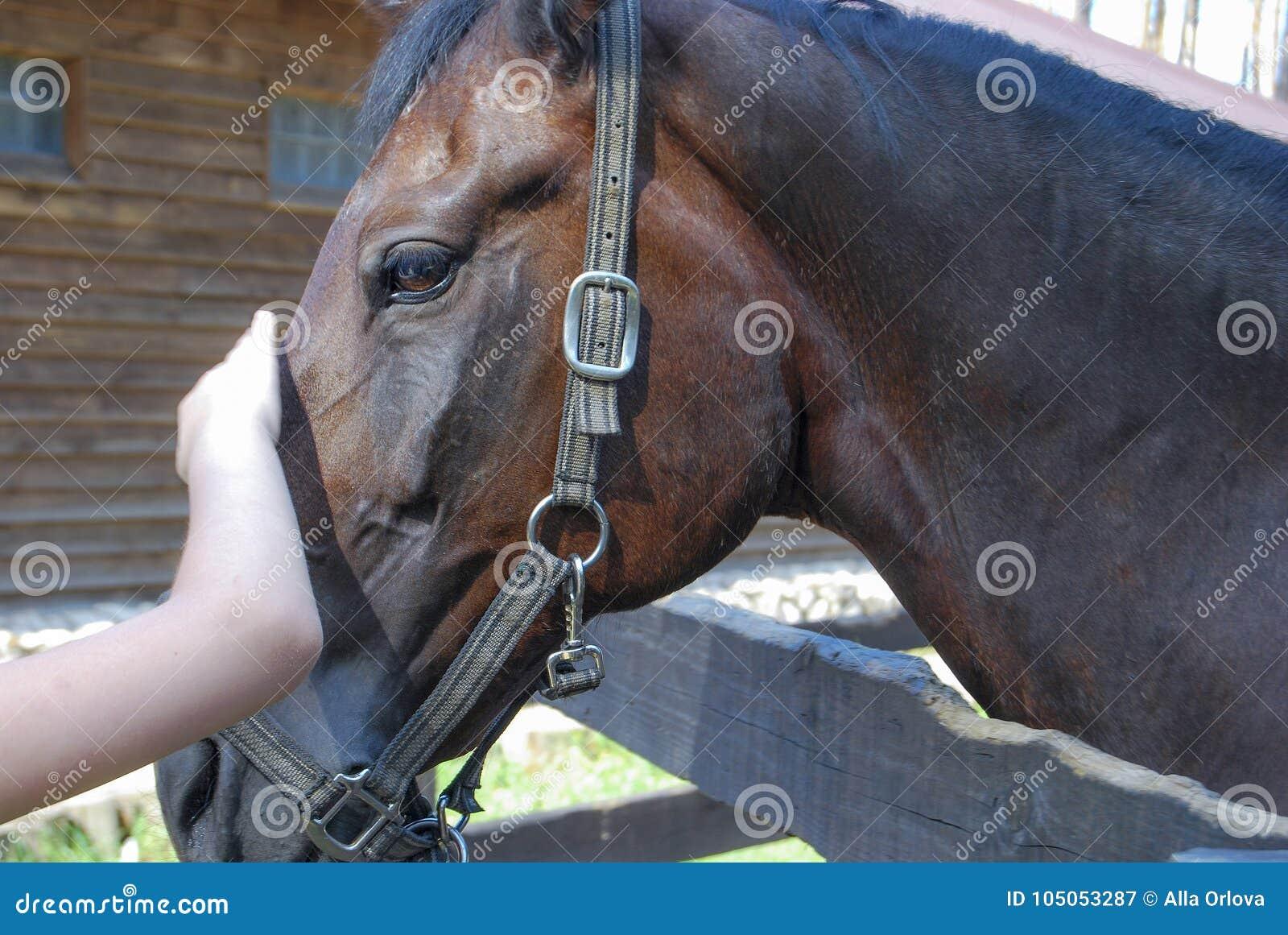 A mão do ` s da criança afaga o cavalo de baía