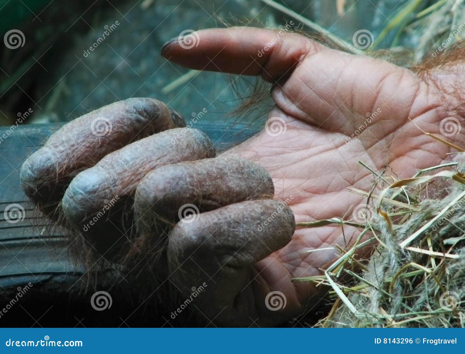 Mão dos gorila