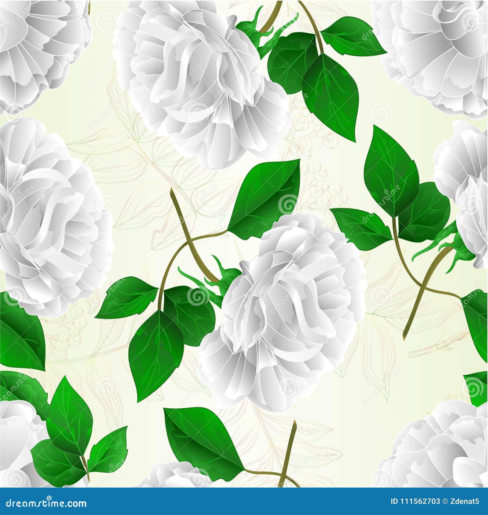 A mão editável da ilustração do vetor do vintage da flor branca da rosa sem emenda da textura e do fundo natural das folhas tira