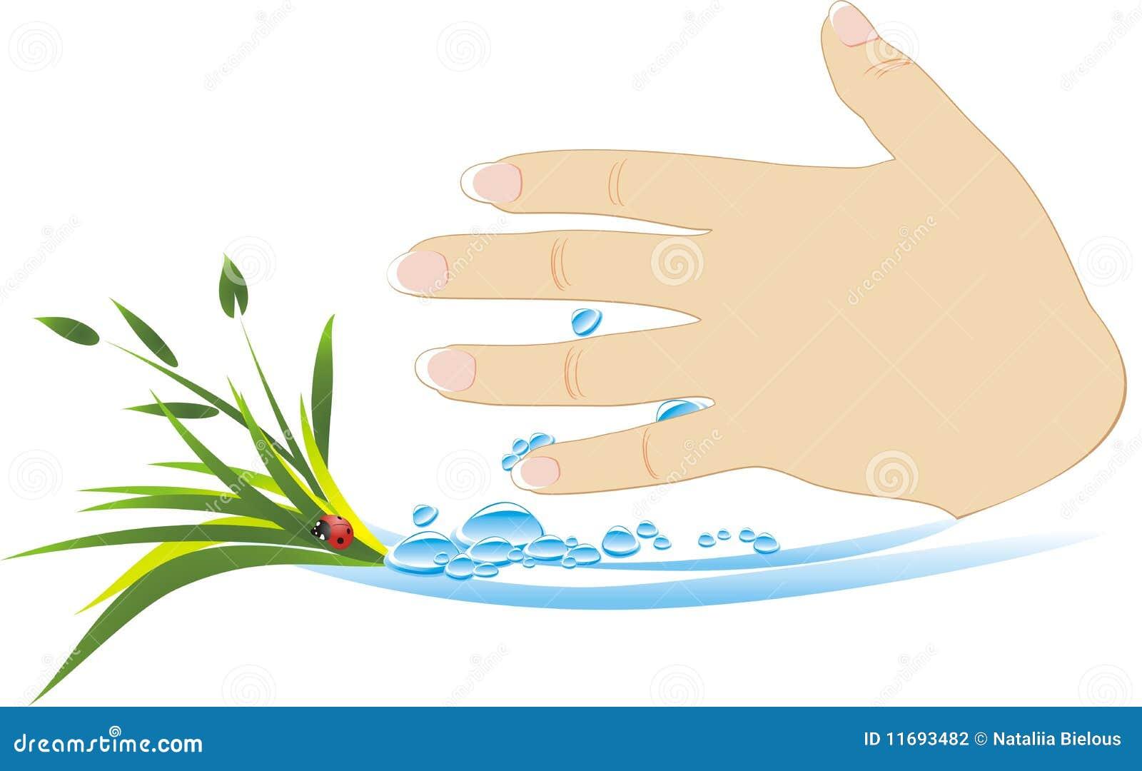 Mão fêmea com plantas e gotas da água
