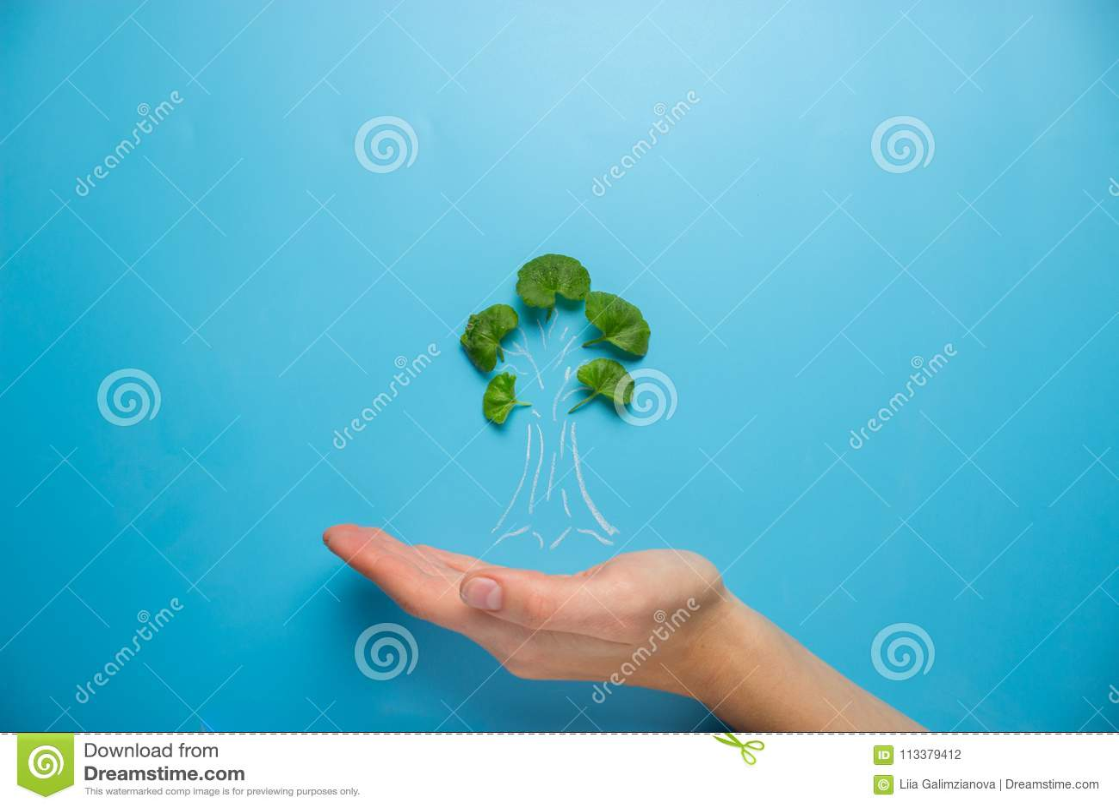 Mão fêmea que guarda o esboço da árvore