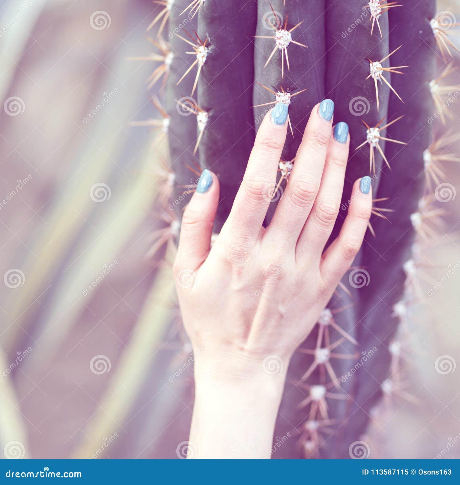 A mão guarda um grande cacto, conceito da beleza Art Contemporary