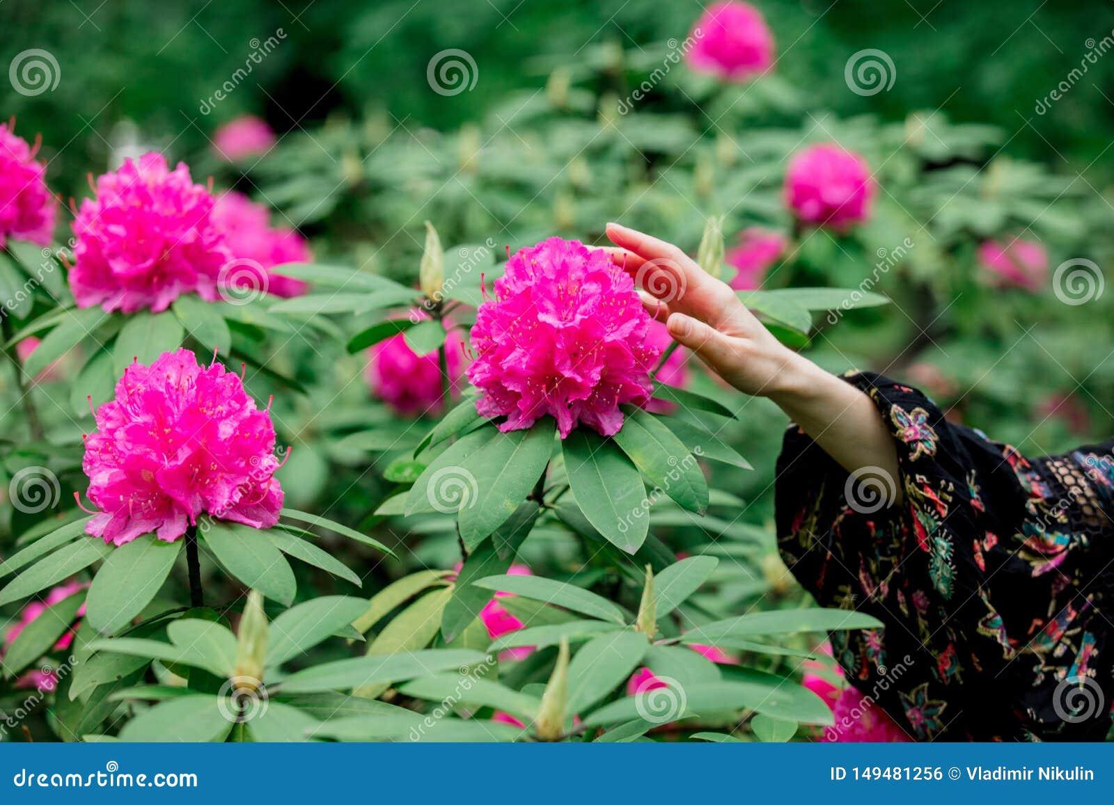 A m?o guardando f?mea perto das flores do rododendro na grarden