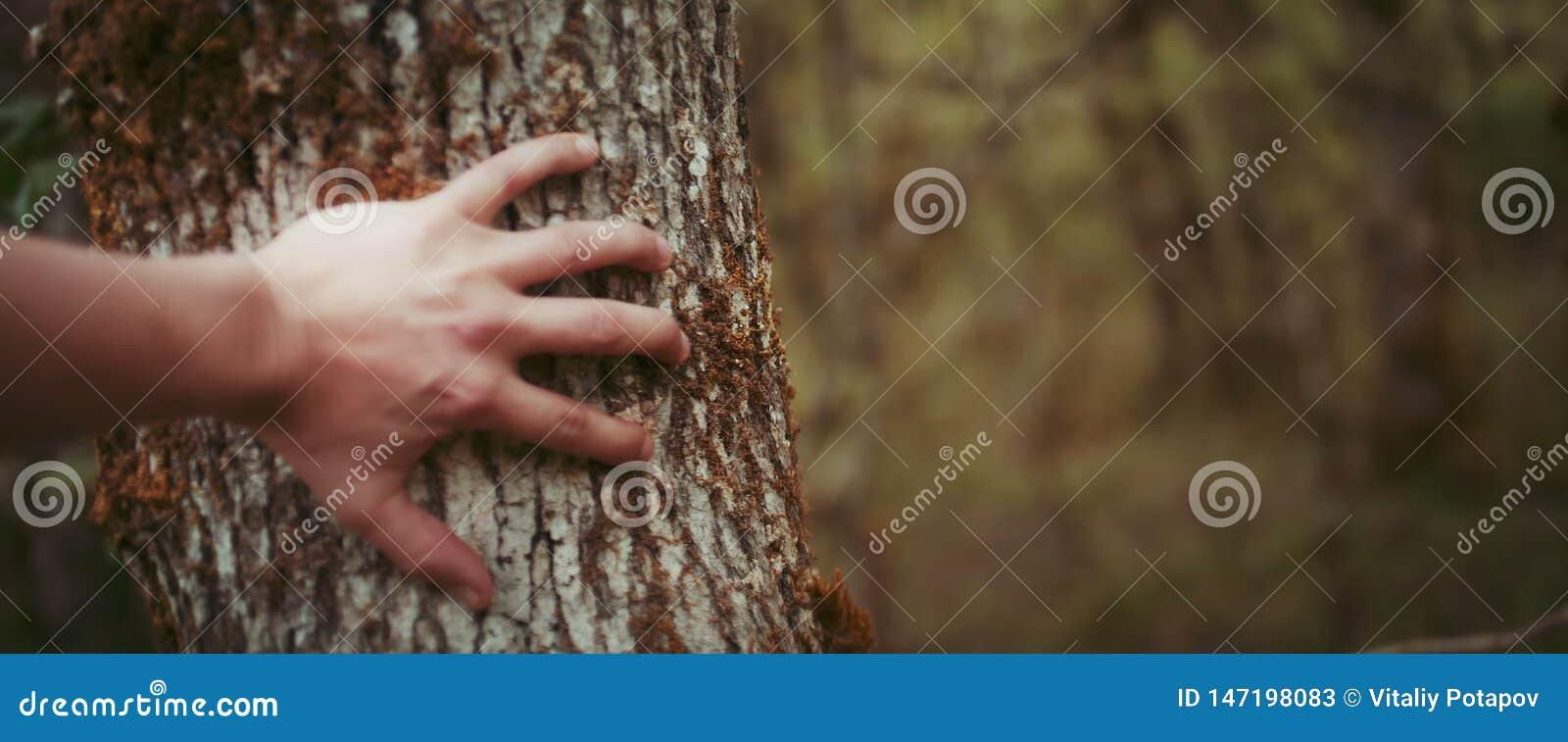 Mão masculina, escova, no fim da árvore acima