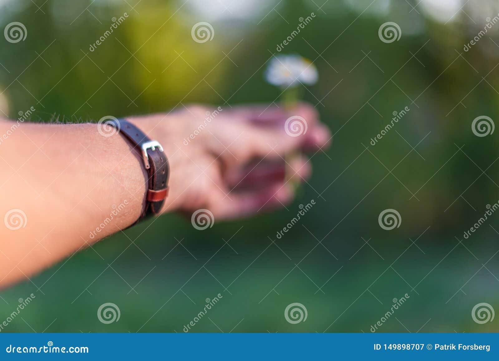 Mão que veste o bracelete de couro marrom que dá uma margarida