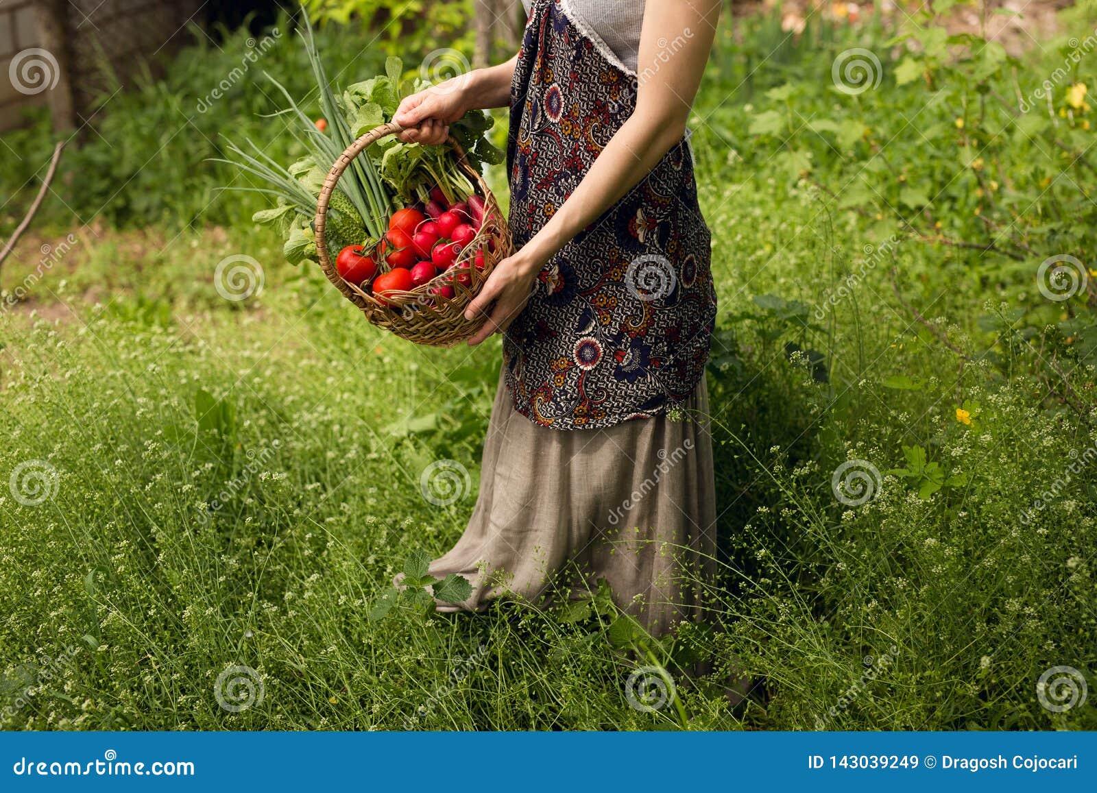 Mãos das mulheres que guardam uma cesta completamente dos vegetais no jardim