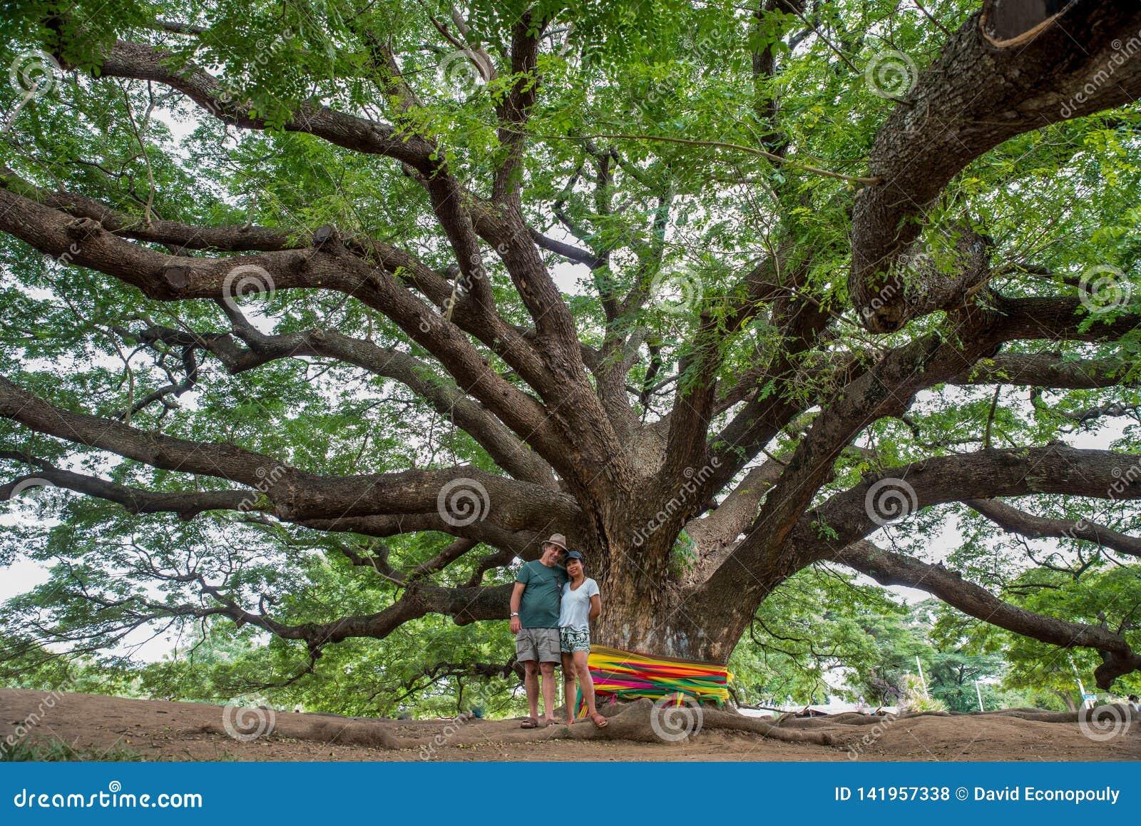 Mąż i żona pod Tajlandzkim Monkeypod drzewem
