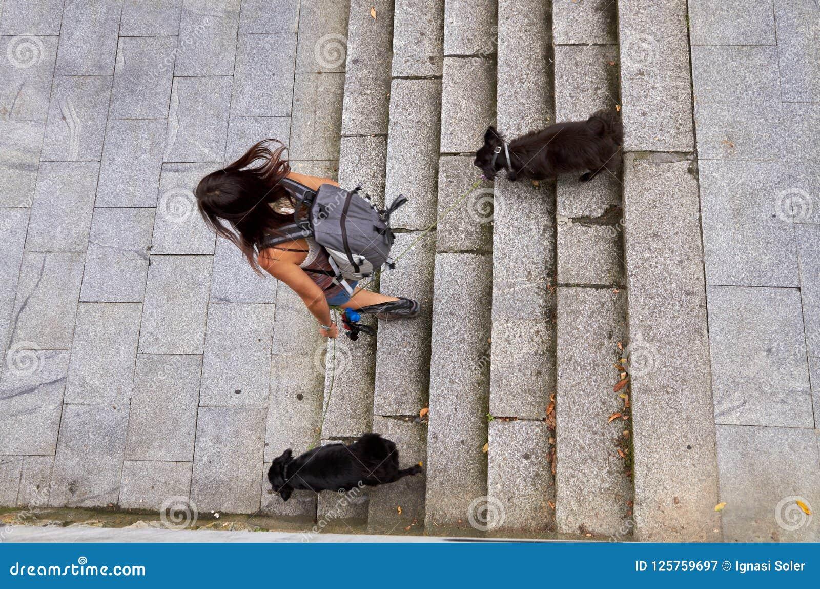 Mädchen mit zwei Hundedem reisen