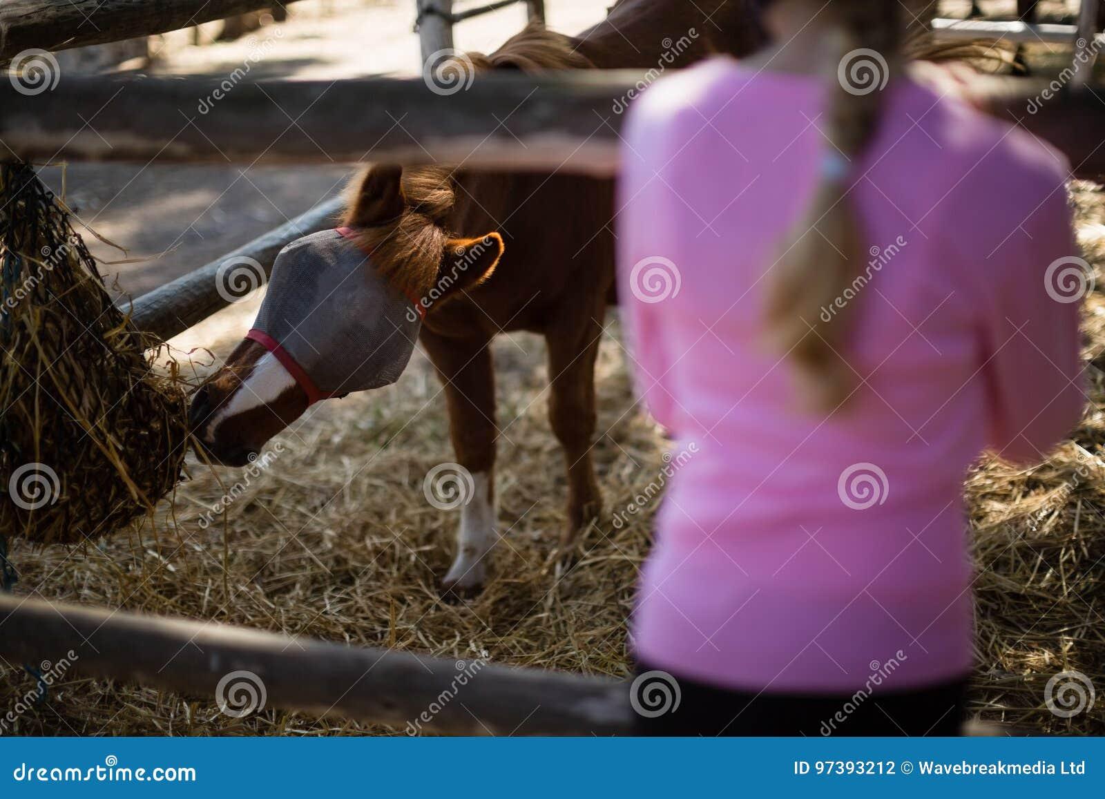 Mädchen, welches das Pferd in der Ranch einzieht