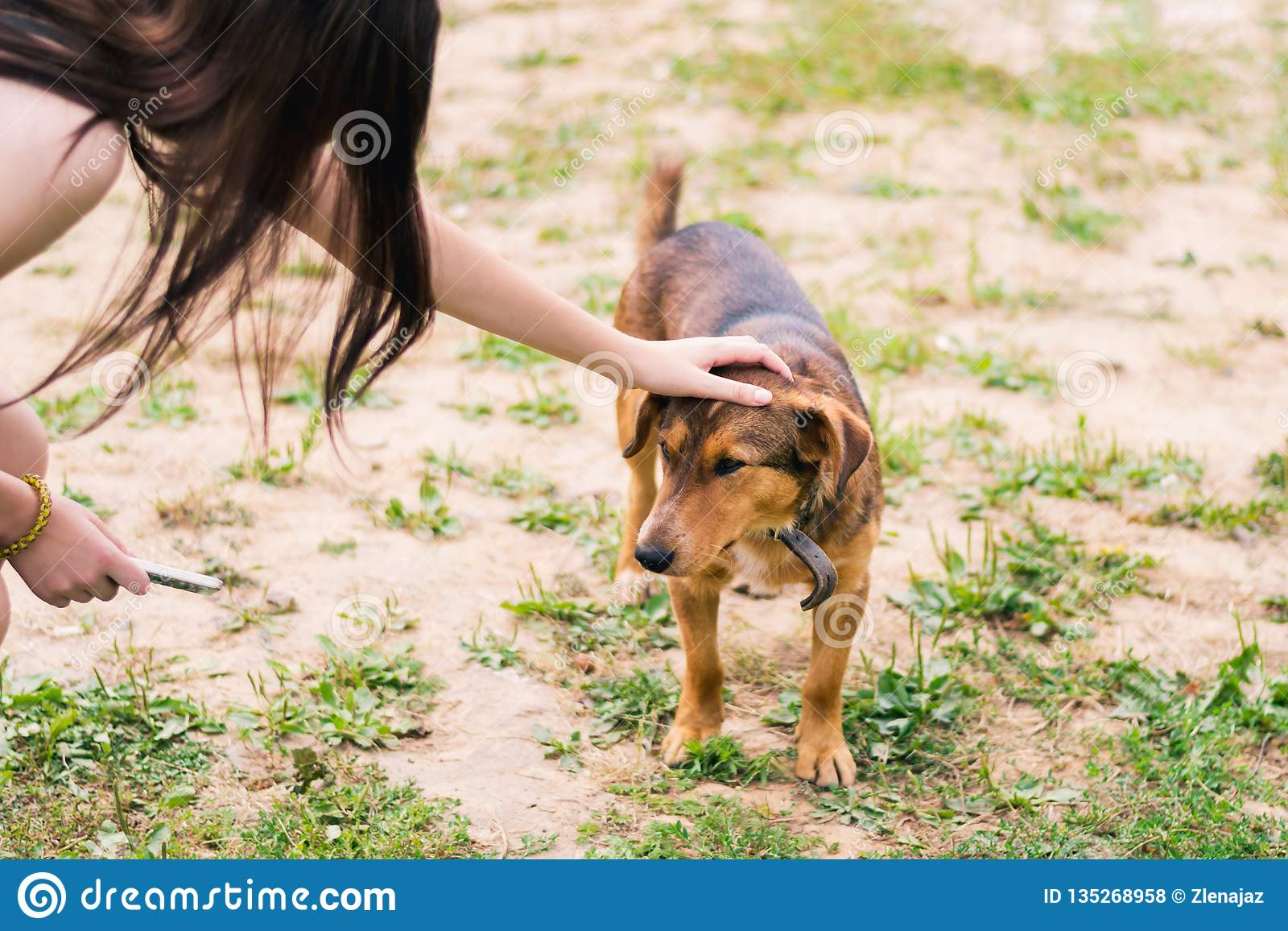Mädchenanschläge der Kopf des braunen glatt-haarigen Hundes in einem Kragen