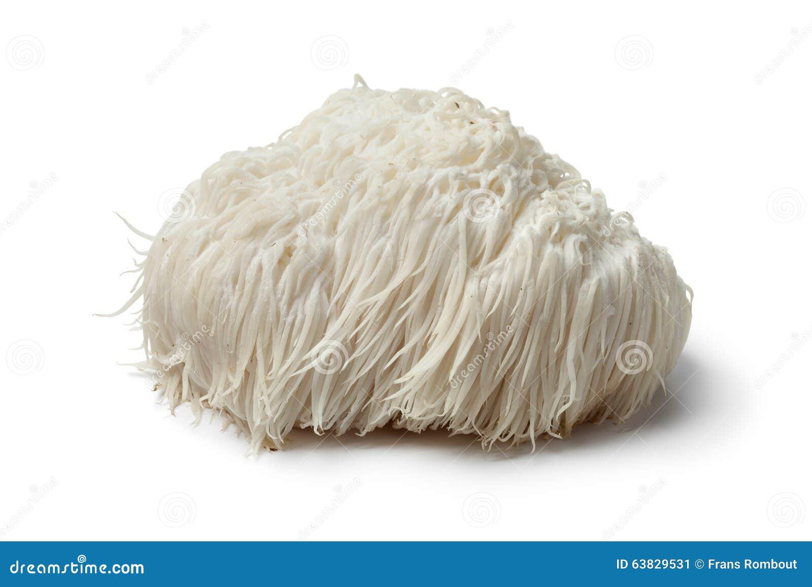 Mähne-Pilz des Löwes