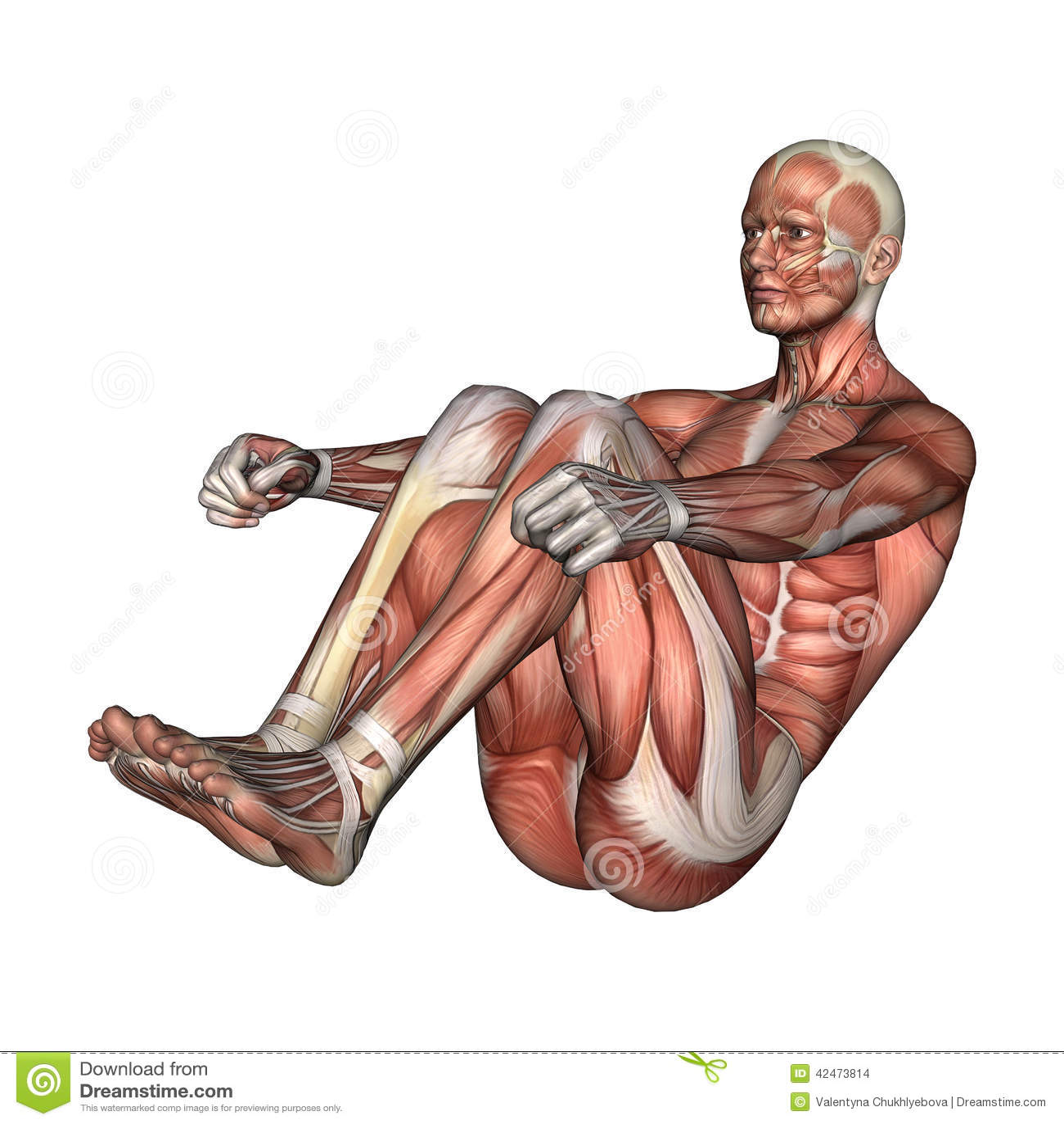Männliche Anatomie-Zahl