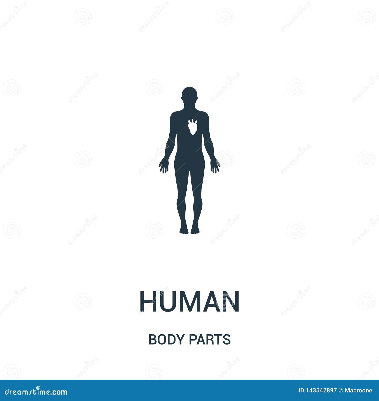 Mänsklig kontur med den vita bilden av hjärtasymbolsvektorn från kroppsdelsamling Tunn linje mänsklig kontur med den vita bilden