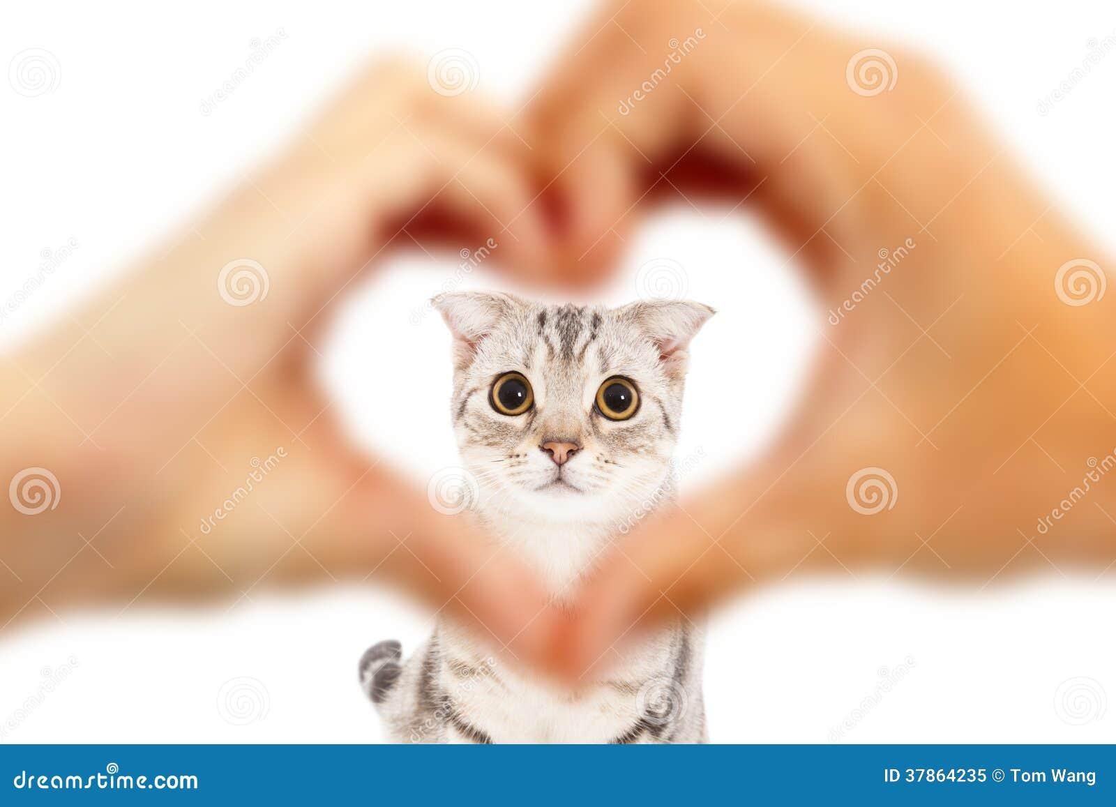 Mänskliga händer gör hjärta att forma och den gulliga katten