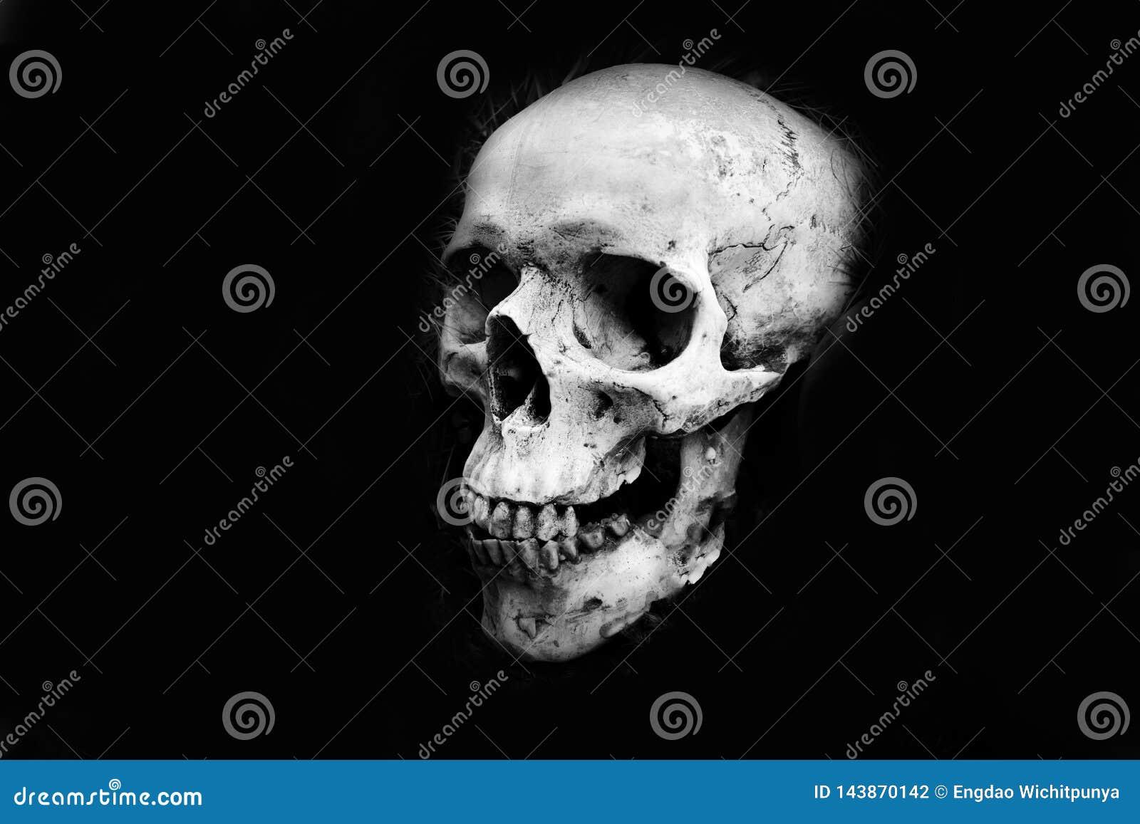 Mänskligt skallehuvud på mörk svart bakgrund - monokrom