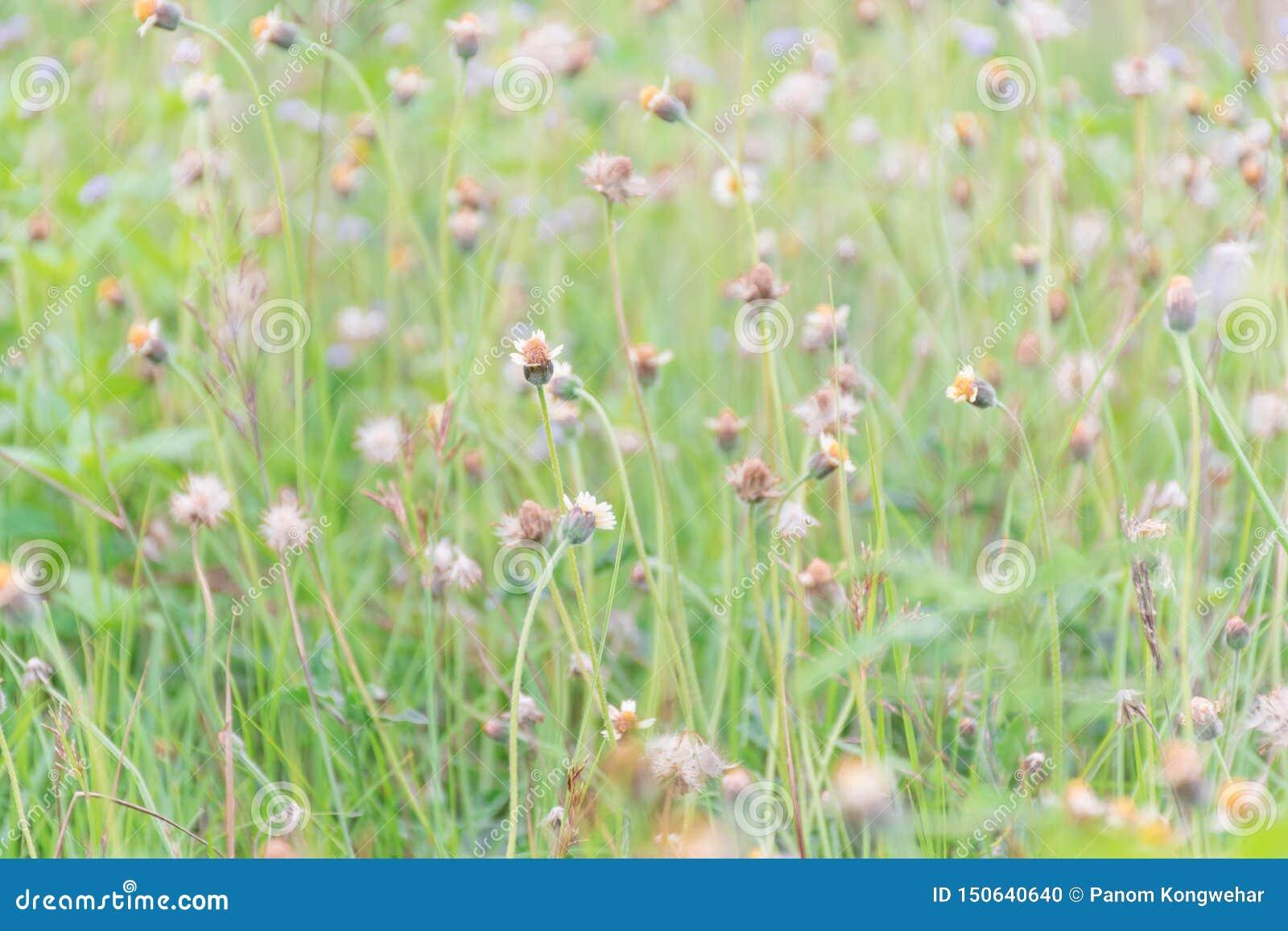 Många gräsblommor