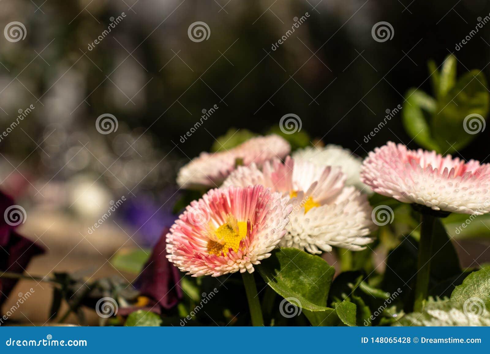 Många mång--färgade blommor