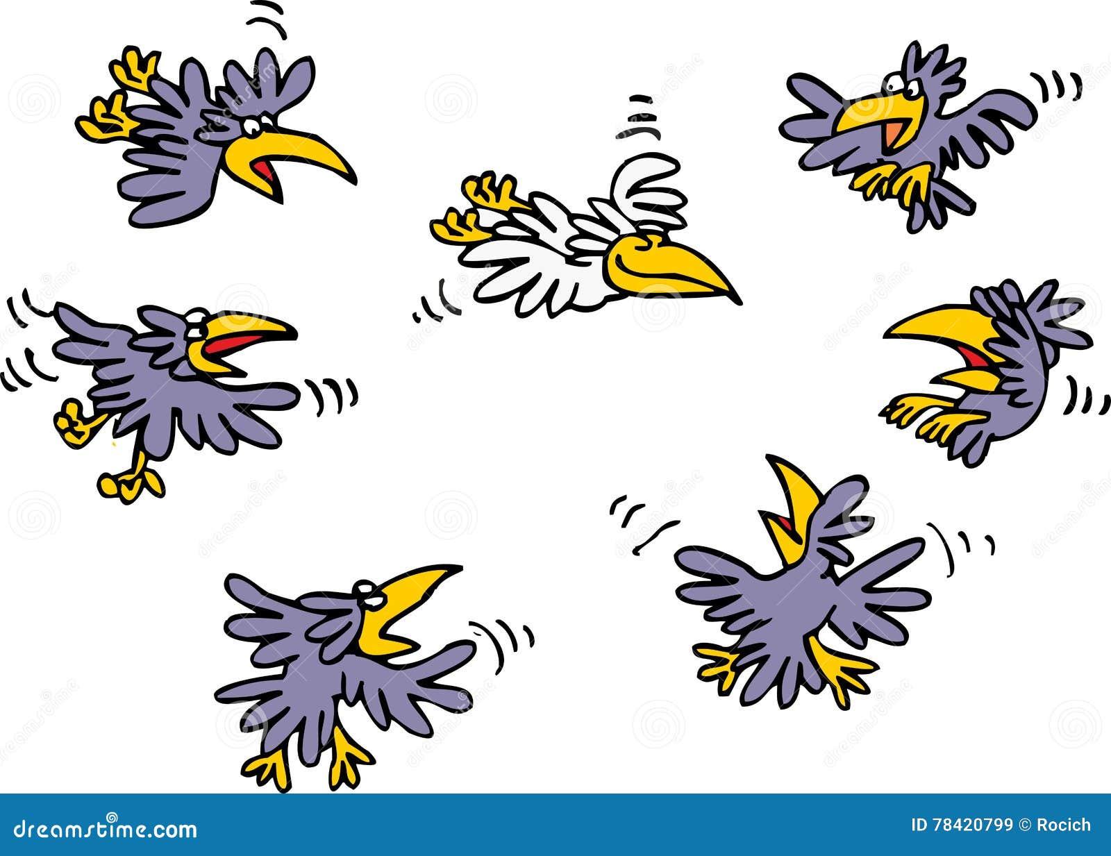 Många svartgalanden och endast vit galande