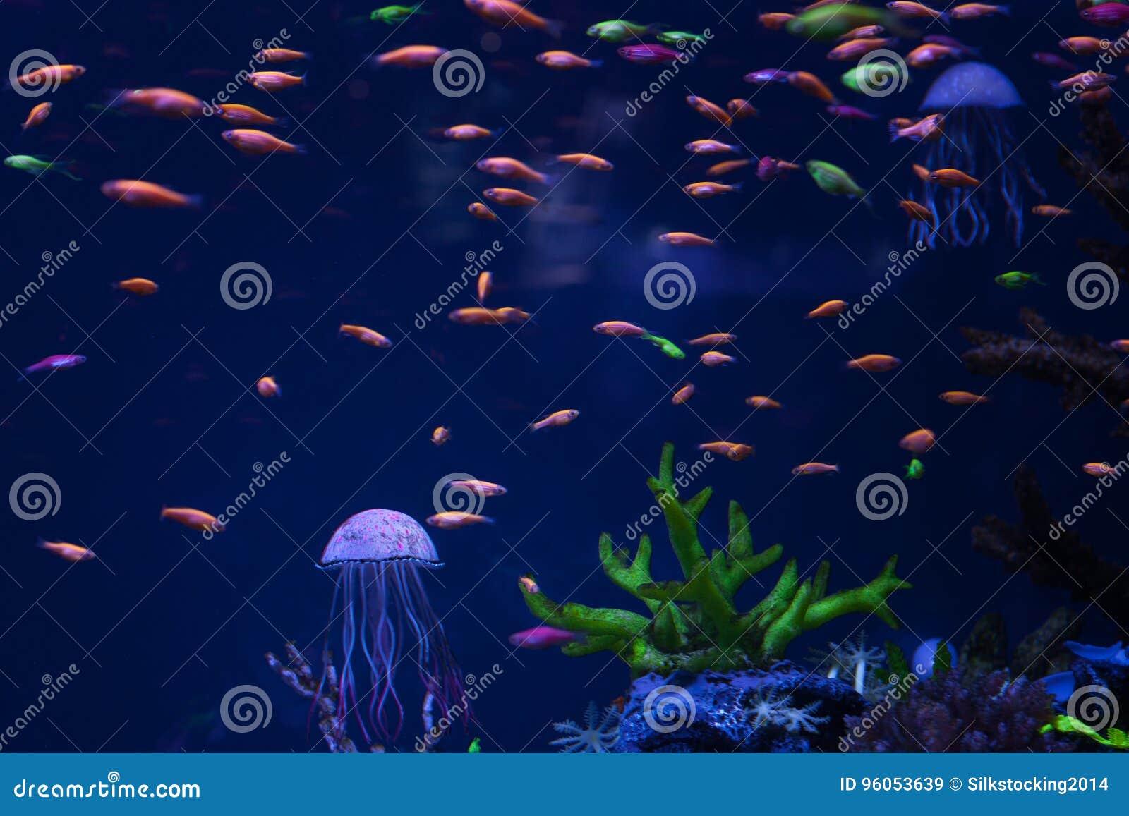 Méduses et poissons lumineux