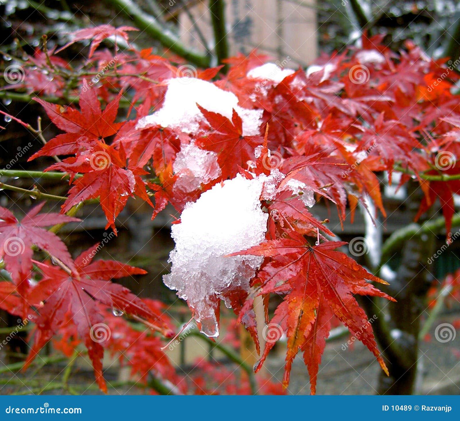 Mélange de saisons