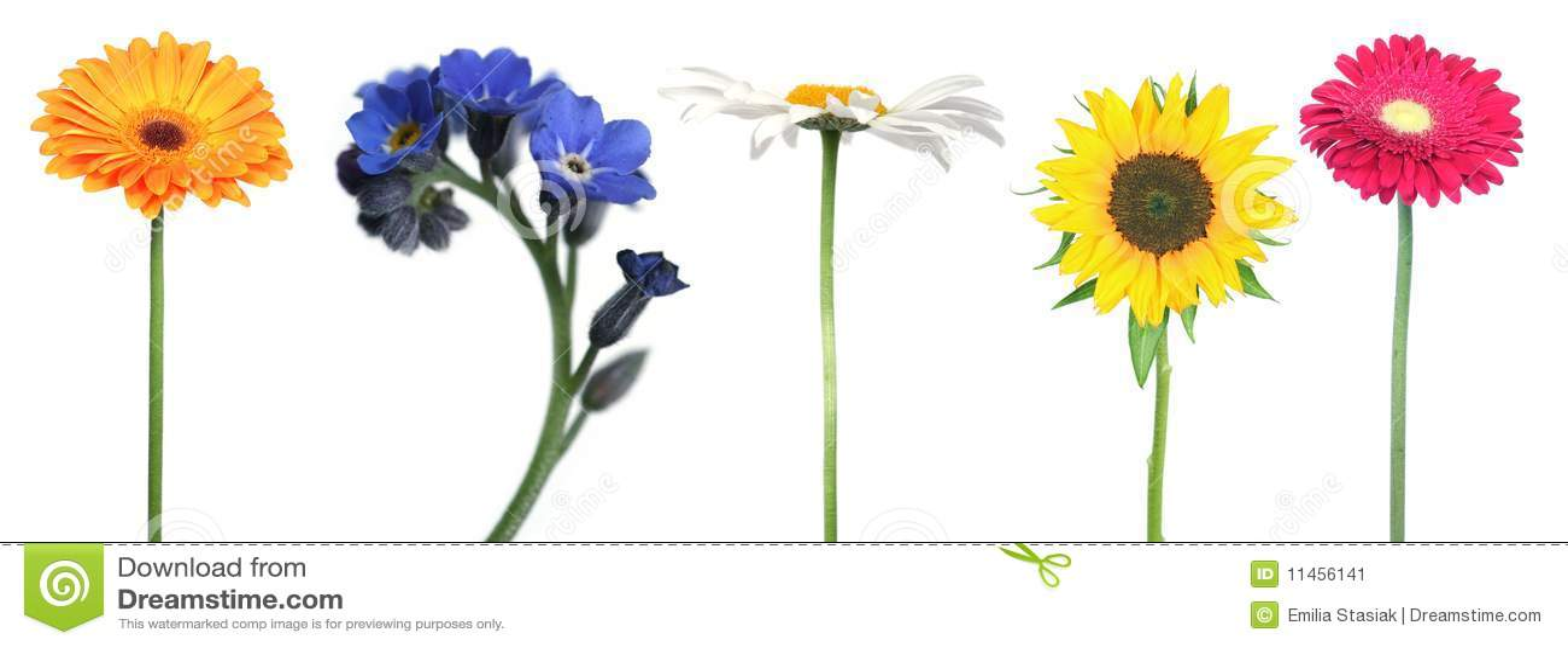 Mélange des fleurs