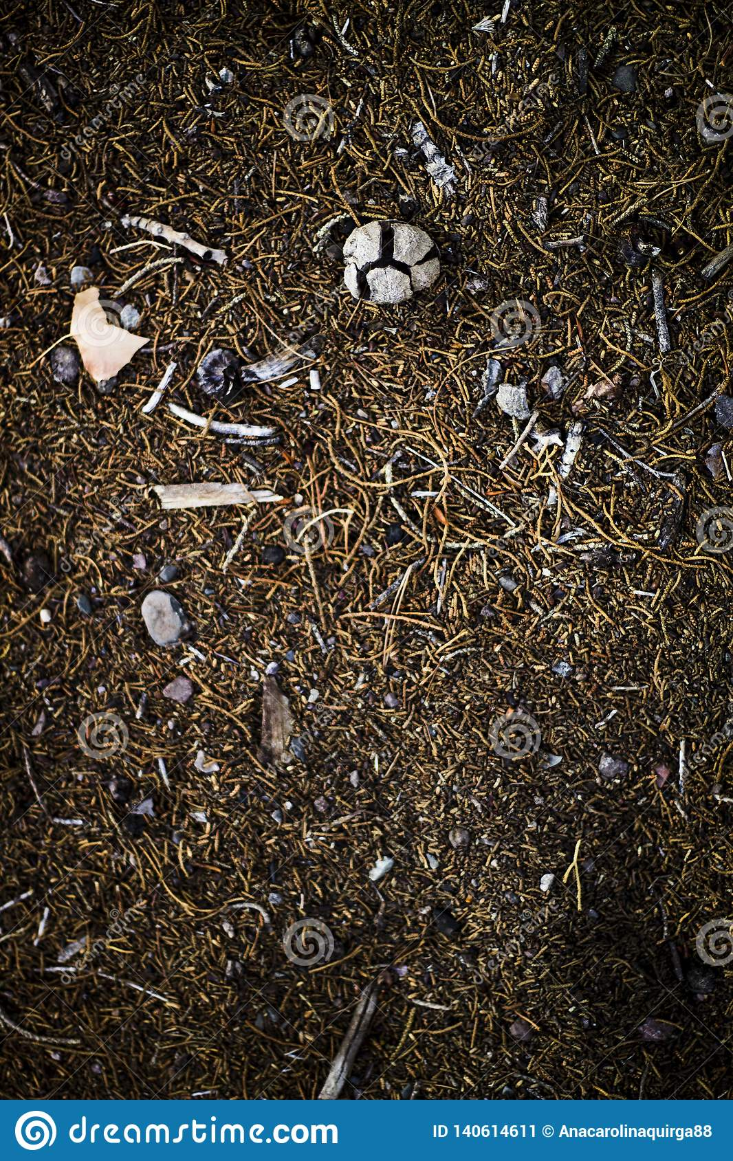 Mélange des objets de champ, des pierres, de la terre foncée, des bâtons et des branches d arbre