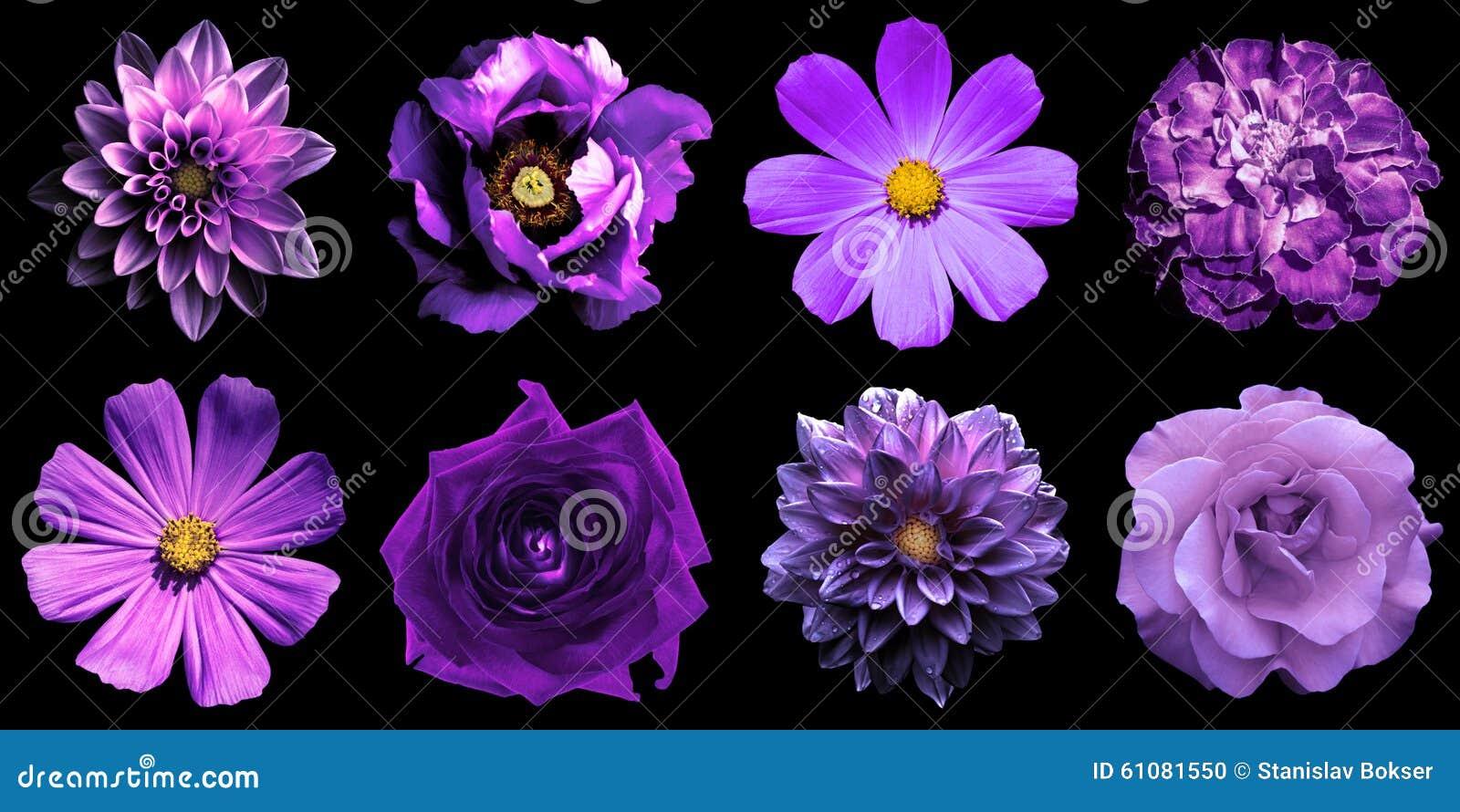 mélangez le collage des fleurs naturelles et surréalistes 8 de