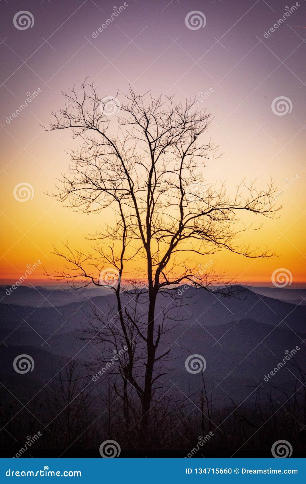 Mój Cherohala drzewo