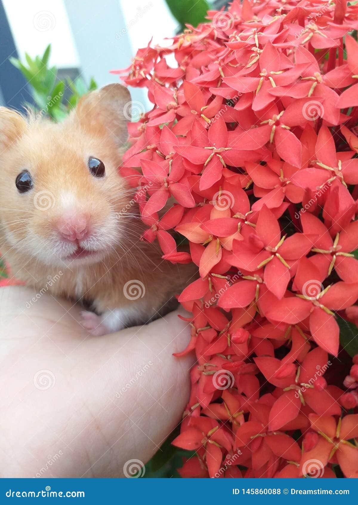 Mój mały chomik Kwiaty