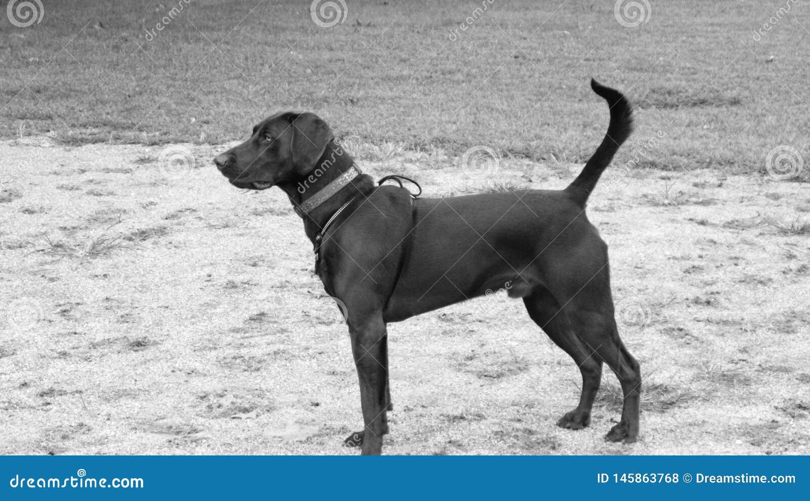 Mój psia odin pozycja w polu