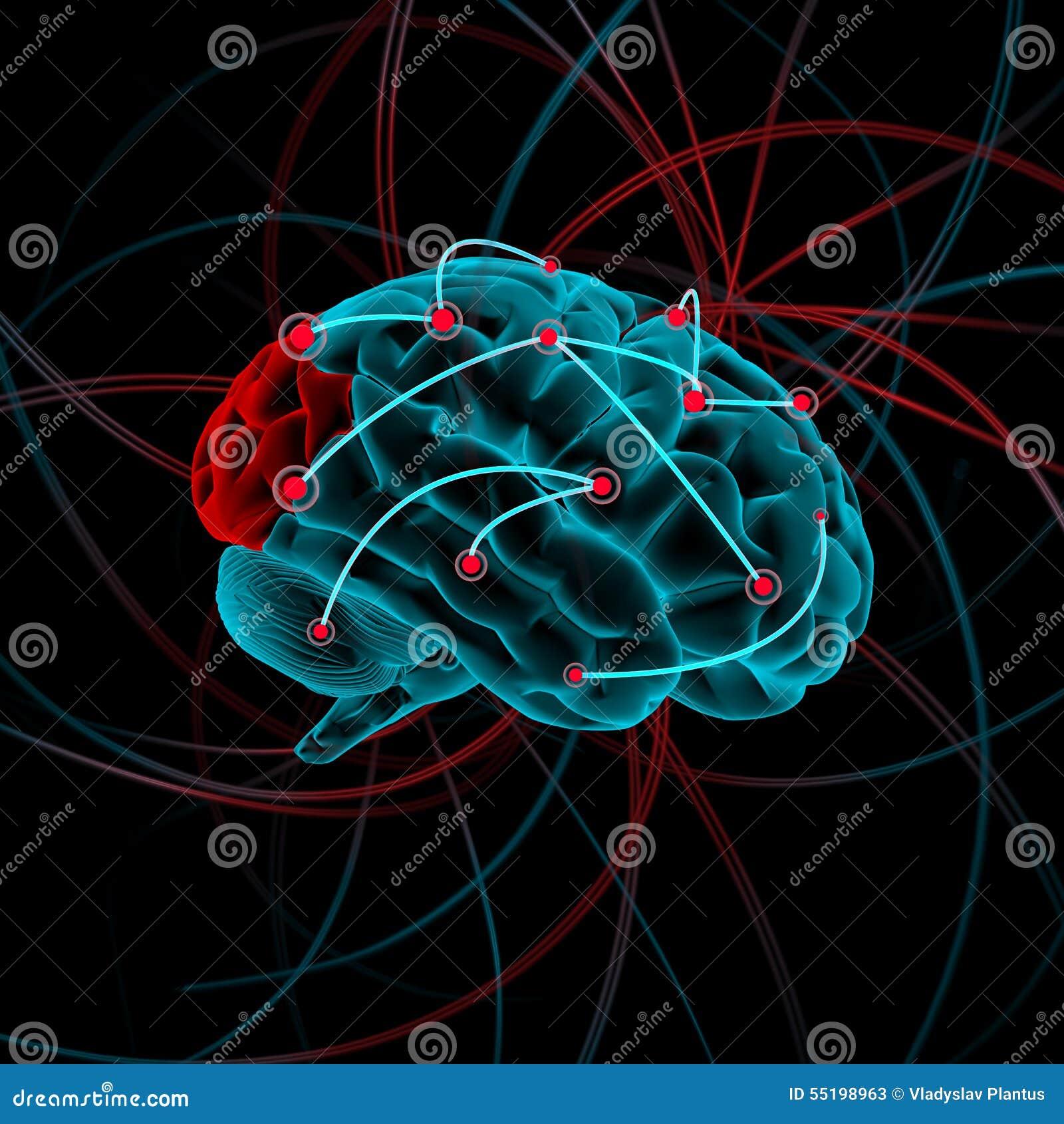 Mózg bw koloru cztery ilustraci różnica