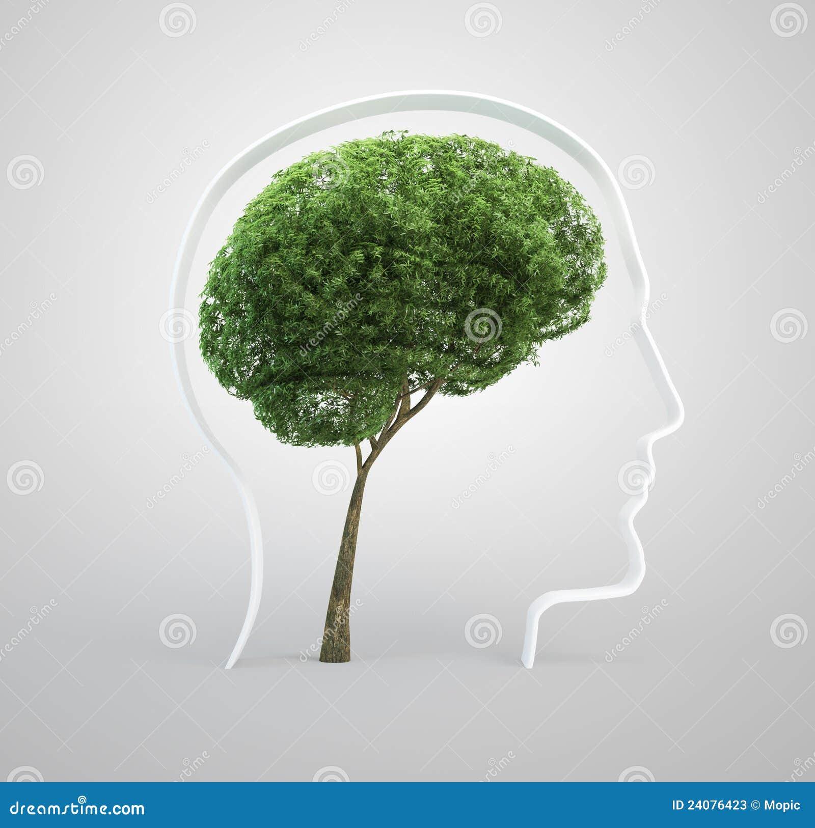 Mózg drzewo kierowniczy ludzki