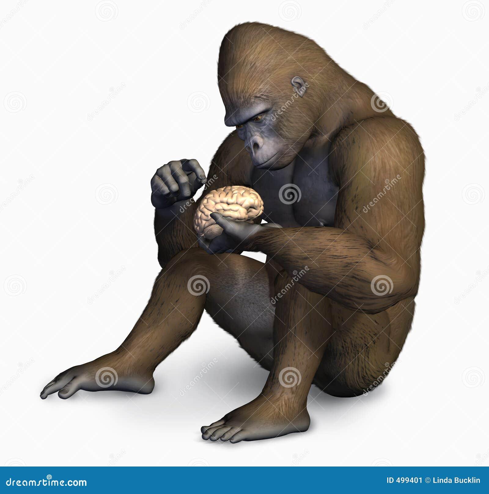 Mózg goryla ścinku ludzkiej sprawdzić drogę