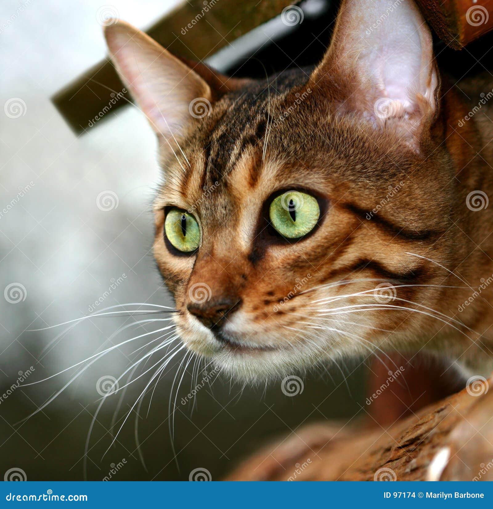 Mörder-Katze