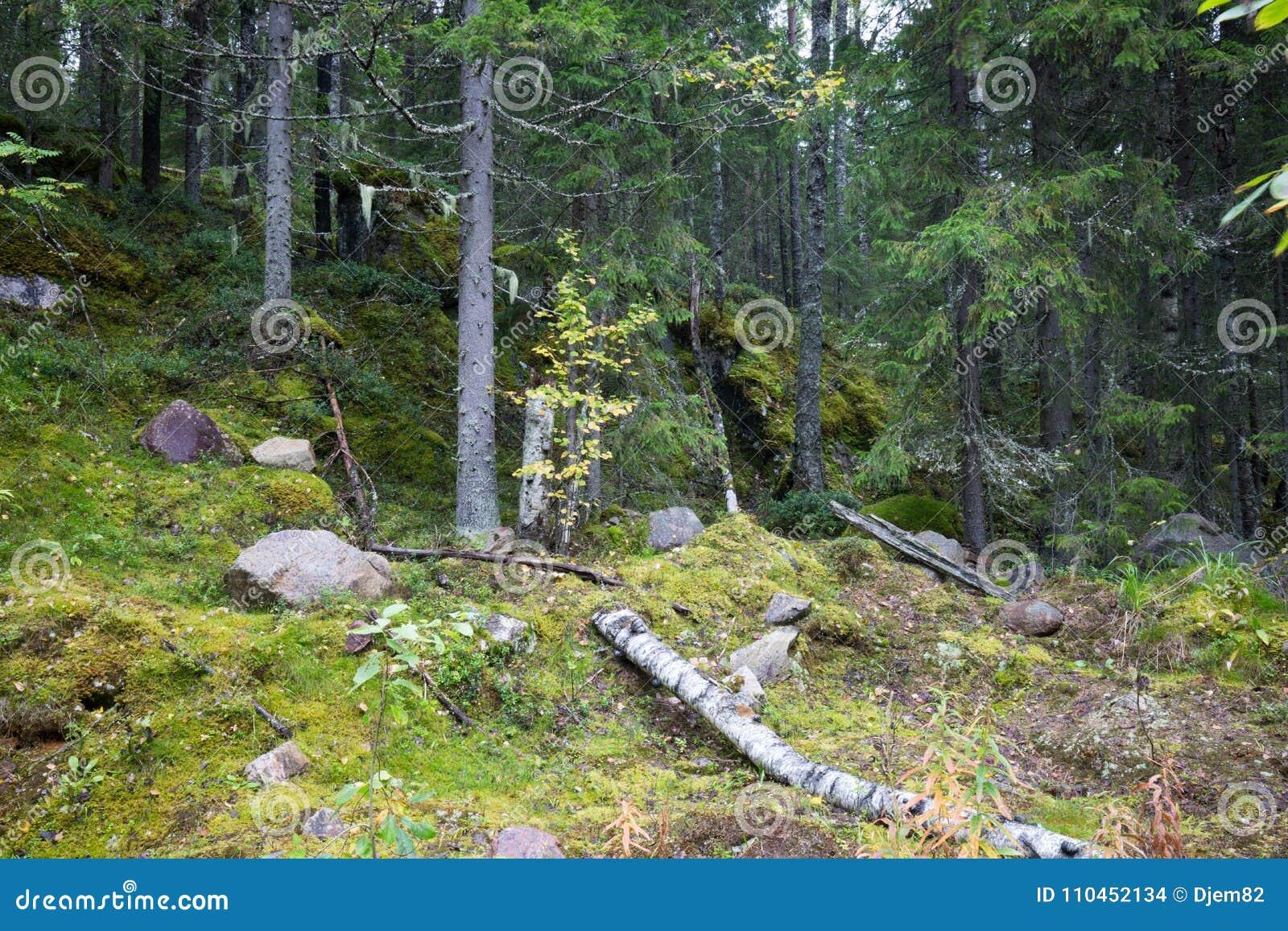 Mörk skogbakgrund