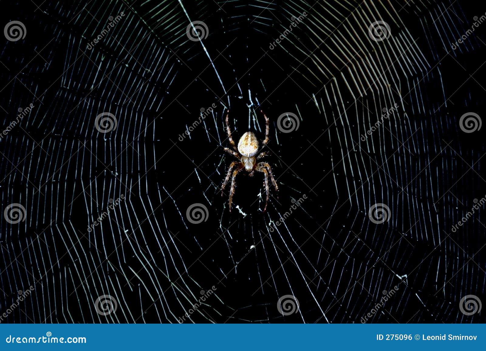 Mörk spindel